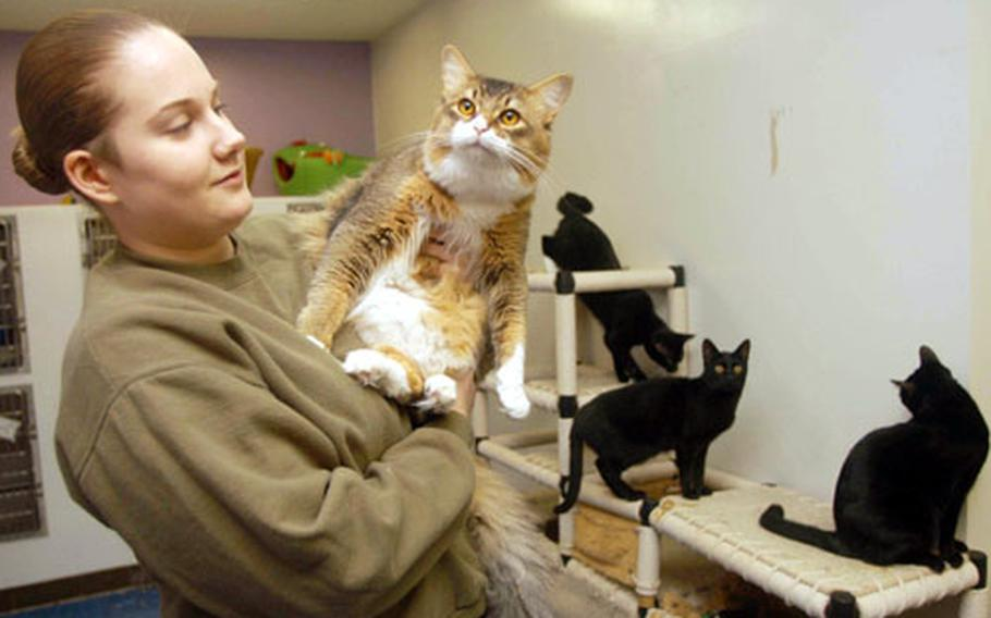 """Stephanie Barry holds """"Mr. Preppy,"""" -- one of about 40 cats and kittens at Yokosuka's Pets Are Worth Saving shelter."""
