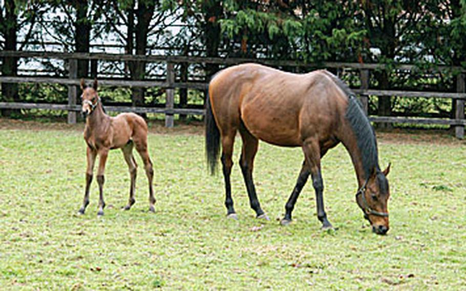 The progeny of fast stallions and quality mares give birth to little foals that will one day, hopefully, run faster than mom and dad.