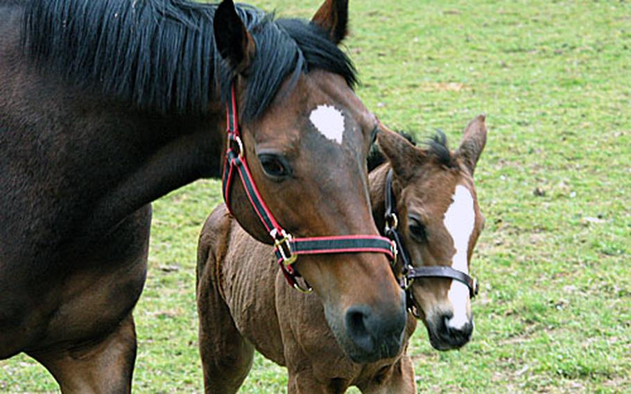 Mum and baby pose for a nice family portrait at The National Stud, a breeding estate two miles southwest of Newmarket.