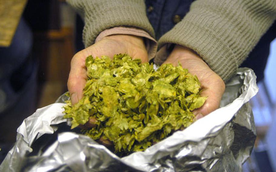 Dennis Cooper, owner of The Brandon Brewery, shows one of the types of hops that he uses to brew beers.