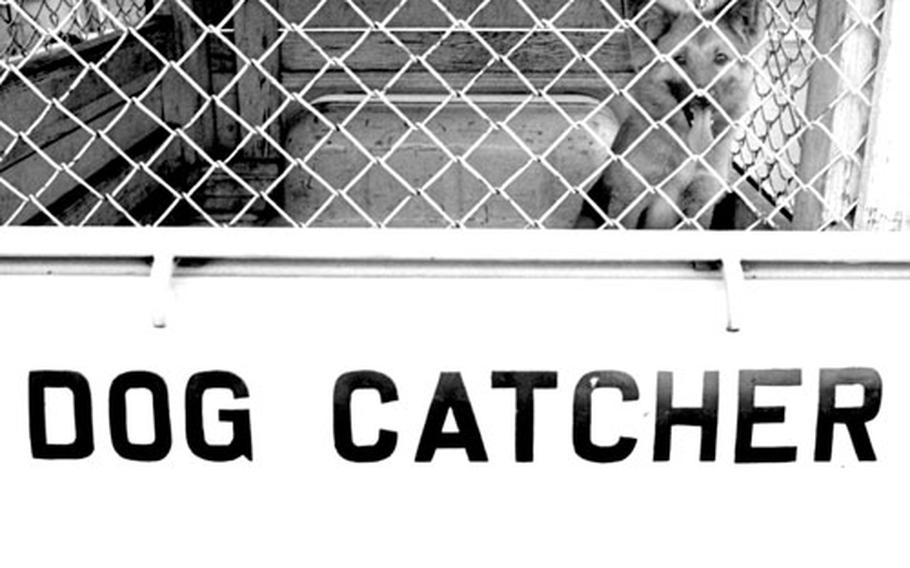Yokohama dog catcher Takashi Ozawa and some of his business associates.