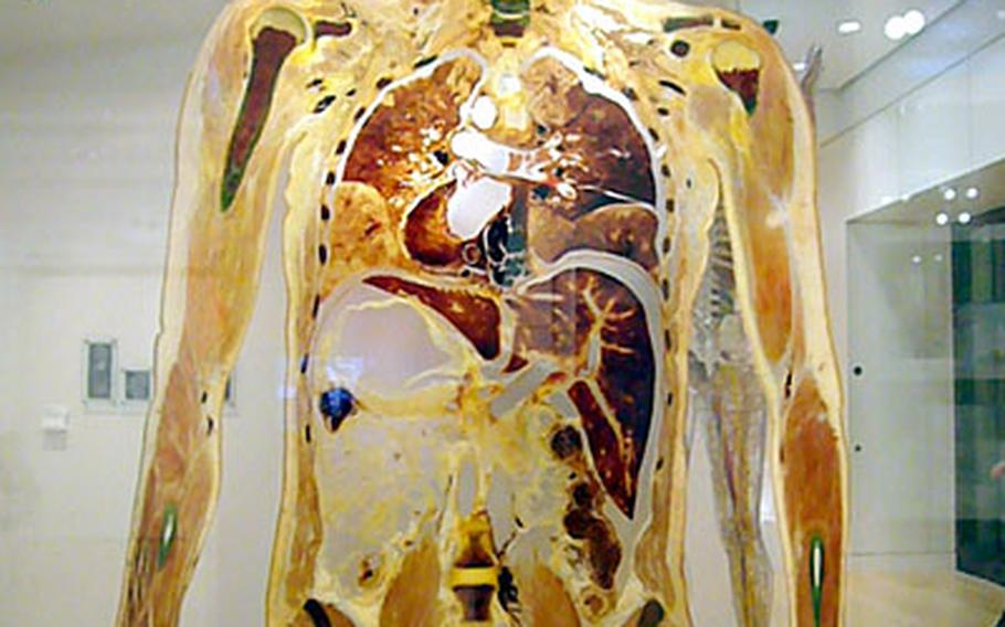Possibly the most interesting piece of the Wellcome Collection is the human slice, a centimeter-thick slab of flesh that allows visitors to see the inside a fully-intact body. The eccentric gallery in London has more than 1,300 items on display, mainly revolving around the human body and the field of medicine.