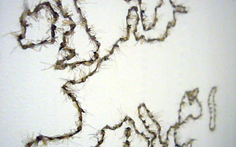 A world map made out of dead mosquitoes can be found inside London's Wellcome Collection.
