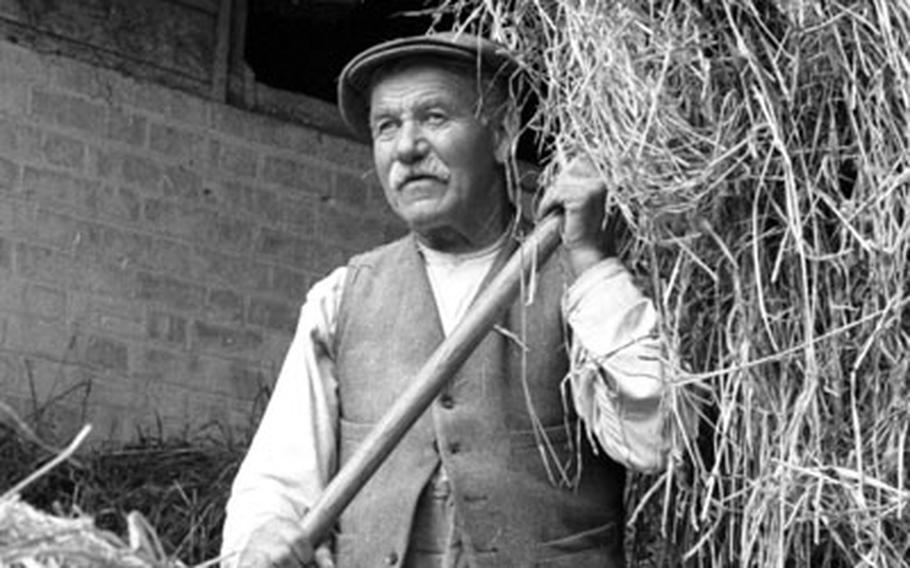 With a herd of over 300 cows, hay was a valuable commodity at the Kiln Farm.