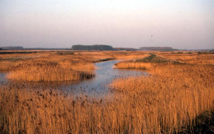 The Lakenheath Fen wetlands are on land that was once farmland. The reserve attracts a variety of bird species throughout the year. It is also the home to several types of deer and small mammals called water voles.