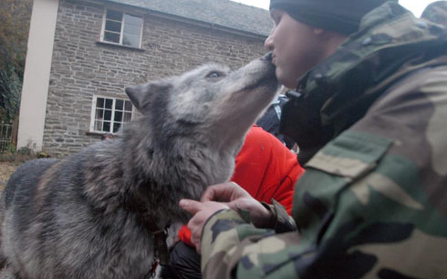 Staff Sgt. Clinton Petit gets a peck from Madadh, one of two highly domesticated wolves at the Wolf Watch U.K. center.