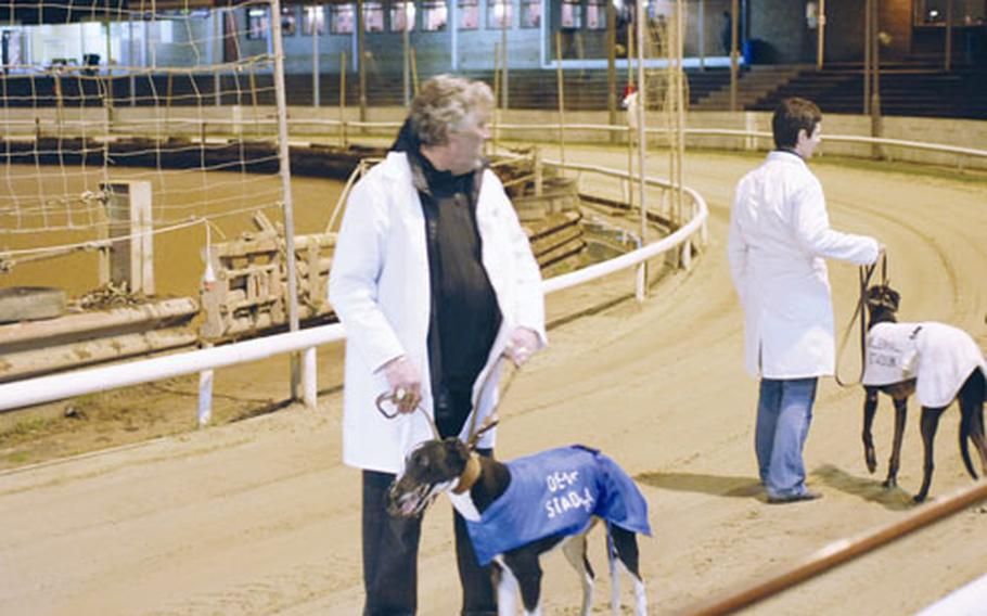 Trainers prepare their dogs for a greyhound race. The races, on Tuesday and Friday nights, draw crowds of up to several hundred people.