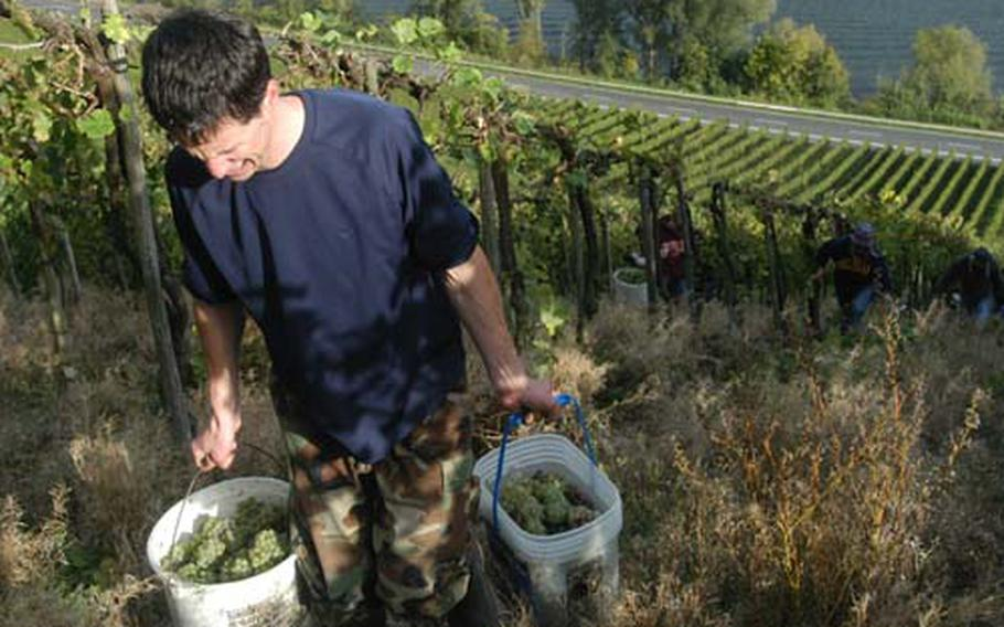 Retired Air Force Major Mark Schmidt hauls two buckets of grapes up the pitched slopes. He is one of the few employees at Cipolla's vineyards.