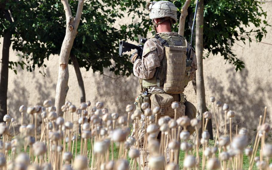 Marine Sgt. Randy Williamson, a team leader with Company I, 3rd Battalion, 2nd Marines, walks past a field of harvested poppy in the middle of a small village north of Musa Qala's district center during a patrol May 27 to engage with locals and deter Taliban activity. The local economy is almost totally dependent on poppies.