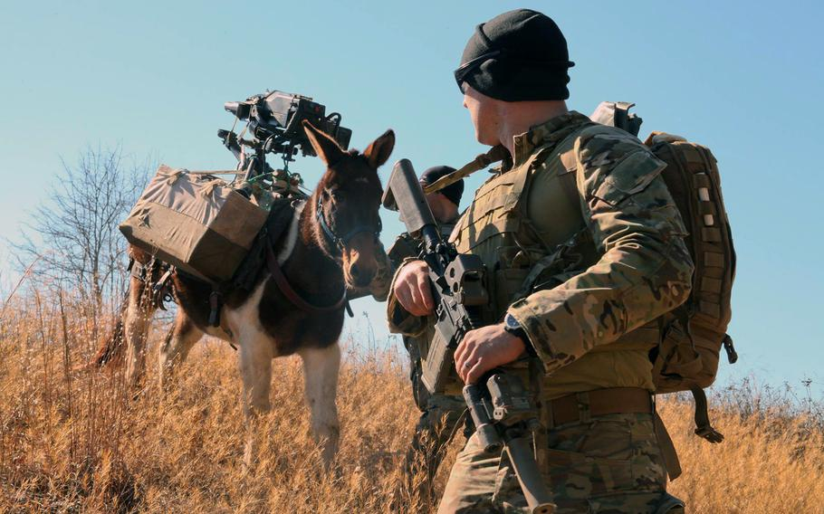 A U.S. Army Green Beret, assigned to 3rd Special Forces Group (Airborne), provides security for a mule carrying an Mk 47 grenade launcher during mule packing training on Fort Bragg, N.C., on Jan. 27, 2015.