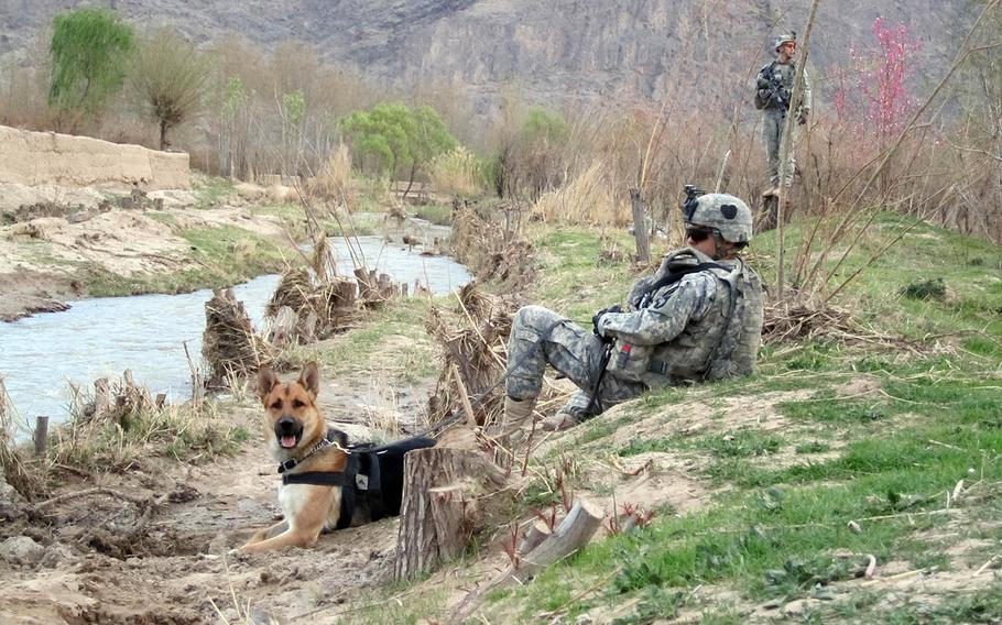 Army specialist Andrew Spaulding and tactical explosives detection dog Bono, the dog he handled, during Bono's first deployment in Afghanistan in 2010. Bono deployed with a different handler again in 2012.