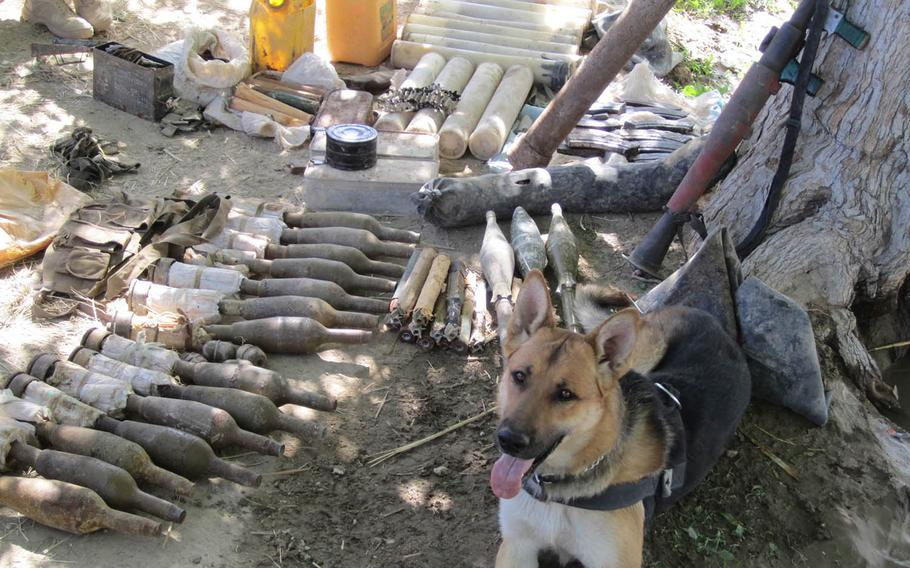 Tactical explosives detection dog Bono guards a cache he helped disocver while on patrol with U.S. forces during his first deployment in Afghanistan in 2010.