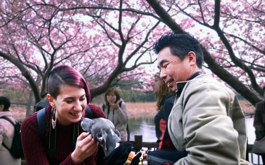Navy spouse Sarah Peets greets a Japanese man and his dog during the recent Miurakaigan Cherry Blossom Festival near Yokosuka Naval Base, Japan.