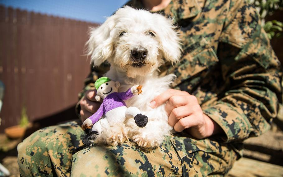 Military members and families moving back to the U.S. that used United to fly pets overseas will now be able to fly them back on the airline, regardless of the carrier's stricter pet travel rules that ban some 25 breeds of dogs and cats starting in June.