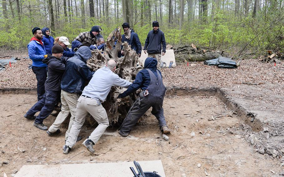 """A recovery team with the Defense POW/MIA Accounting Agency rolls away a tree stump from an excavation site near Lindau, Germany, in April 2016. The mission eventually led to the recovery and identification of missing World War II pilot 1st Lt. William """"Bill"""" Gray Jr. Gray's remains, found embedded in the tree's roots. DPAA has stepped up efforts to account for missing personnel from World War II."""