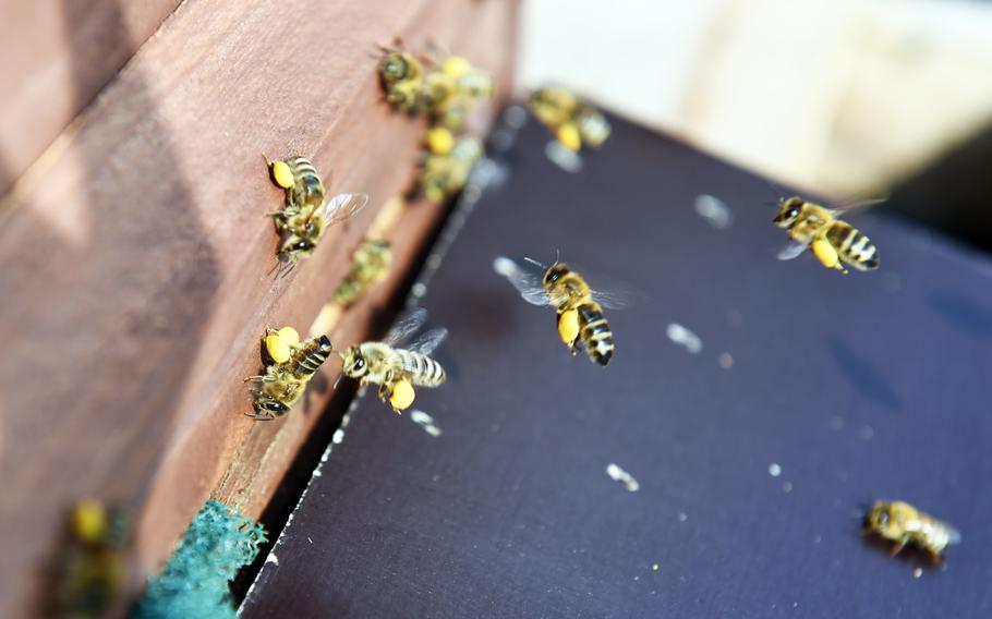 Bees carry pollen to a beehive at U.S. Army Garrison Ansbach, in Ansbach, Germany, Friday, Sept. 7, 2018. A group has set up what they call a Bee Haus to benefit plant life in the area.