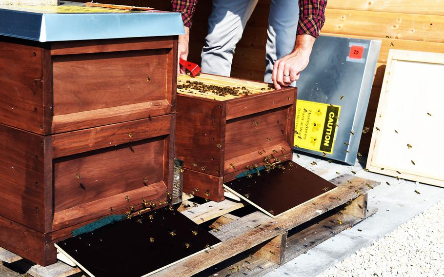 Bees swarm around two beehives at U.S. Army Garrison Ansbach, in Ansbach, Germany, Friday, Sept. 7, 2018. A group has set up what they call a Bee Haus to benefit plant life in the area.