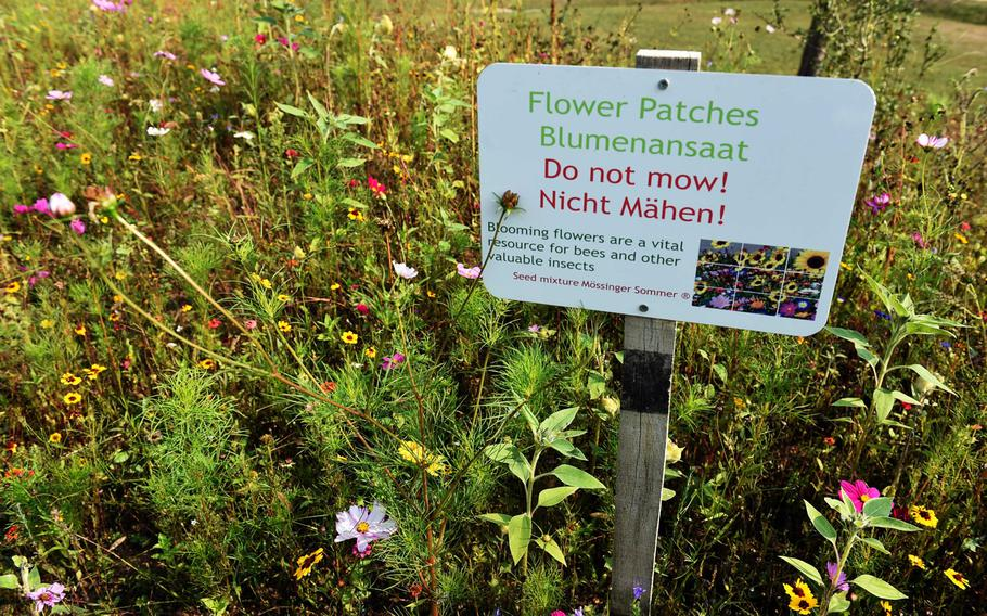 Wild flowers planted at U.S. Army Garrison Ansbach, for the new beehives in Ansbach, Germany, Friday, Sept. 7, 2018.