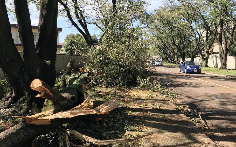 Officials said Typhoon Trami toppled more than 100 trees at Yokota Air Base, Japan, Monday. Oct. 1, 2018.