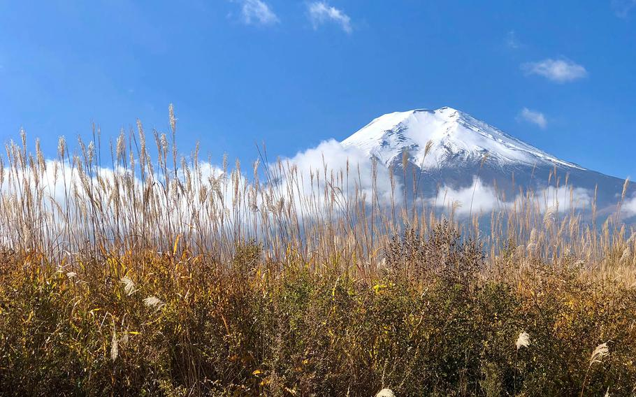 Tall grass was nearly impassable during recent artillery drills at a Marine Corps training range near Mount Fuji.