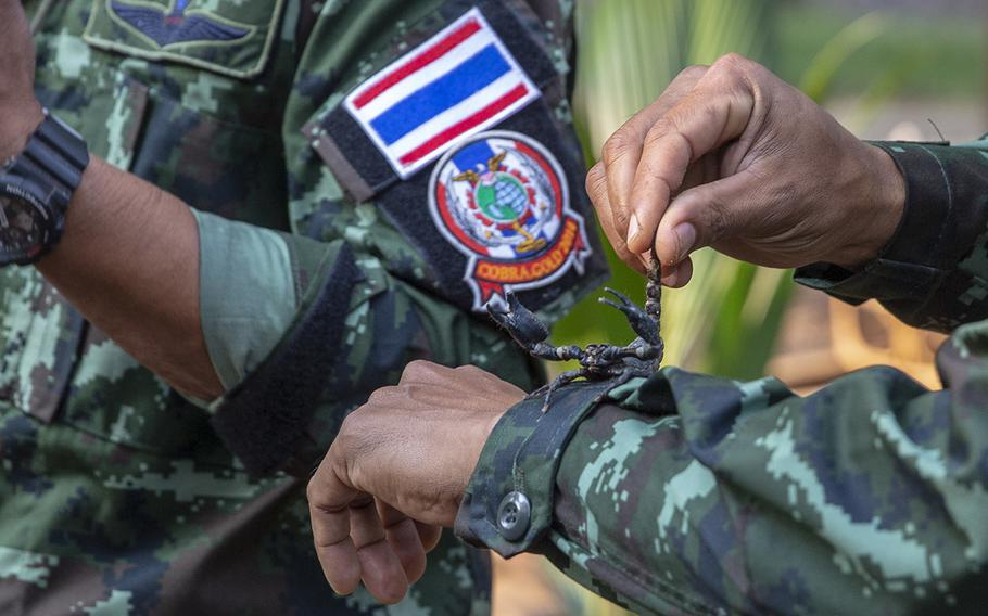 A scorpion lays on the arm of a Royal Thai Armed Forces soldier during exercise Cobra Gold 19 at Phitsanulok, Thailand, on Feb. 13, 2019.