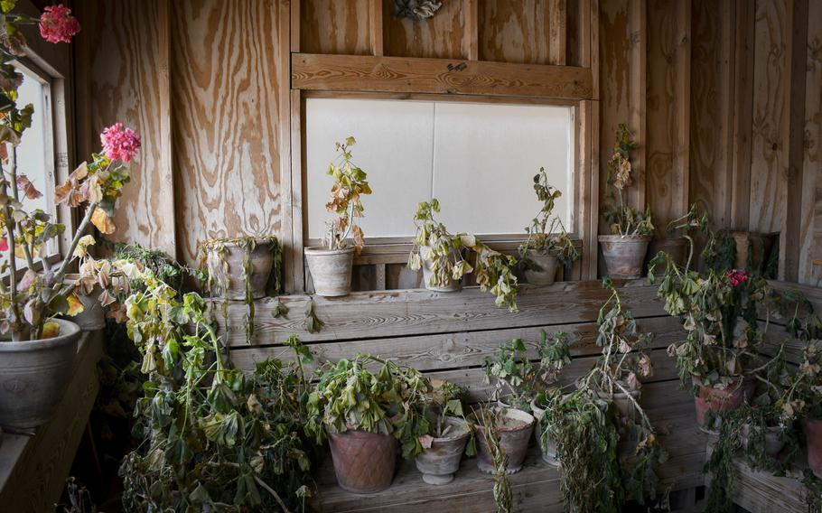 Afghan soldiers stationed at what was once Forward Operating Base Shank in Logar province transformed a bus stop into a greenhouse as part of efforts to modify formerly-American buildings for local needs.