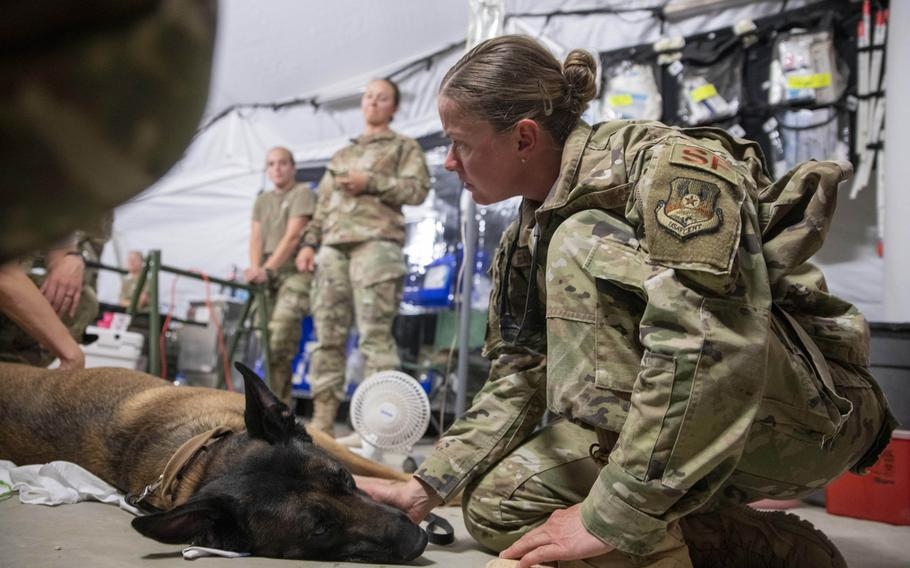 U.S. Air Force Senior Master Sgt. Jessica Fleschner comforts Cvoky, a military working dog assigned to the 378th Expeditionary Security Forces Squadron, after he suffered a heat injury at Prince Sultan Air Force Base, Saudi Arabia June 9, 2020. Cvoky was medically evacuated to Kuwait where he received treatment from U.S. Army veterinary workers.