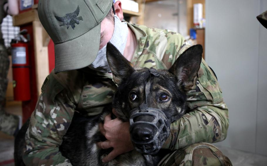 U.S. Army Sgt. Anthony Catania, a military working dog handler with the K9 Task Force at Al Asad Air Base, Iraq, embraces his patrol explosive detector dog, Boni, Oct. 7, 2020. Boni, a German Shepherd, was scheduled to have blood drawn so that the veterinary clinic can identify her blood type and initiate a blood bank for military working dogs.