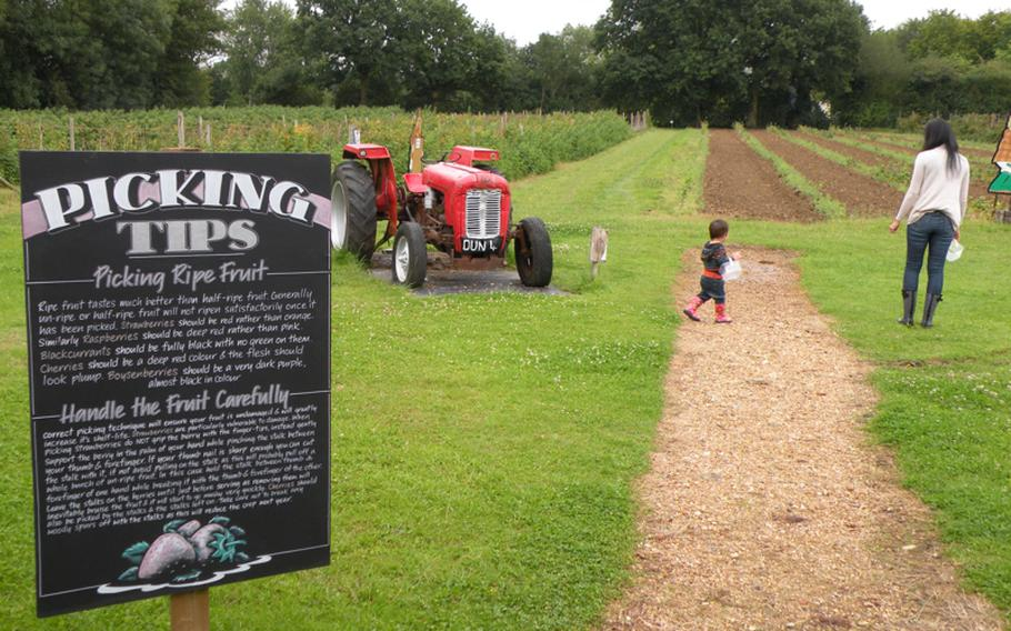 Picking your own fruit and vegetables can be a fun family affair and a great escape to the English countryside.