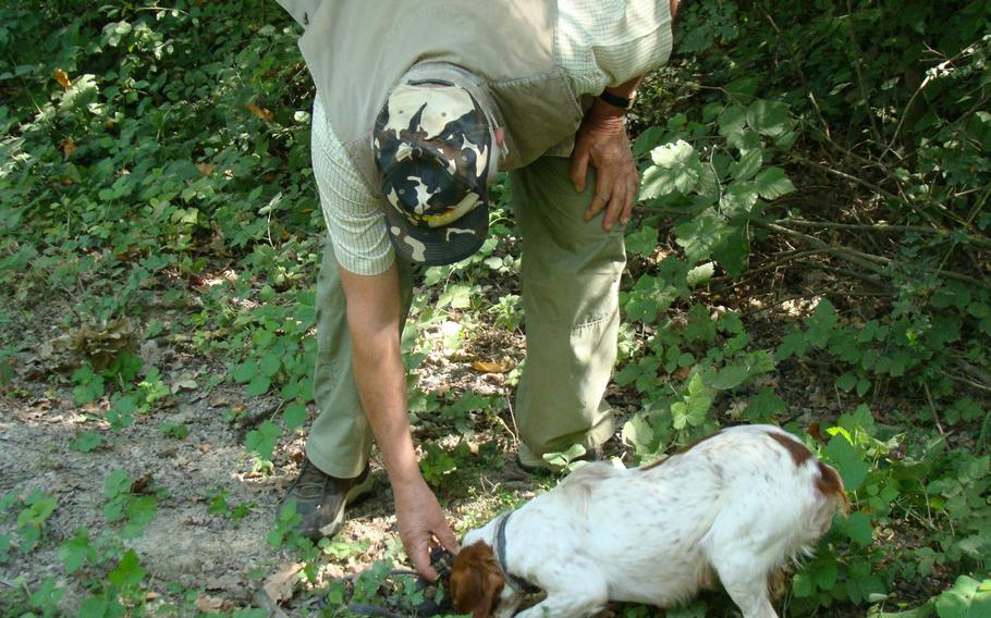 A dog trained to root out the scent of truffles can be man's best friend when it comes to finding the international delicacy. Truffle hunters often work at night so competitors can't see what spots are yielding the fragrant and tasty underground fungus.