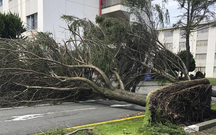 A tree uprooted by Typhoon Faxai blocks a roadway at Yokosuka Naval Base, Japan, Monday, Sept. 9, 2019.