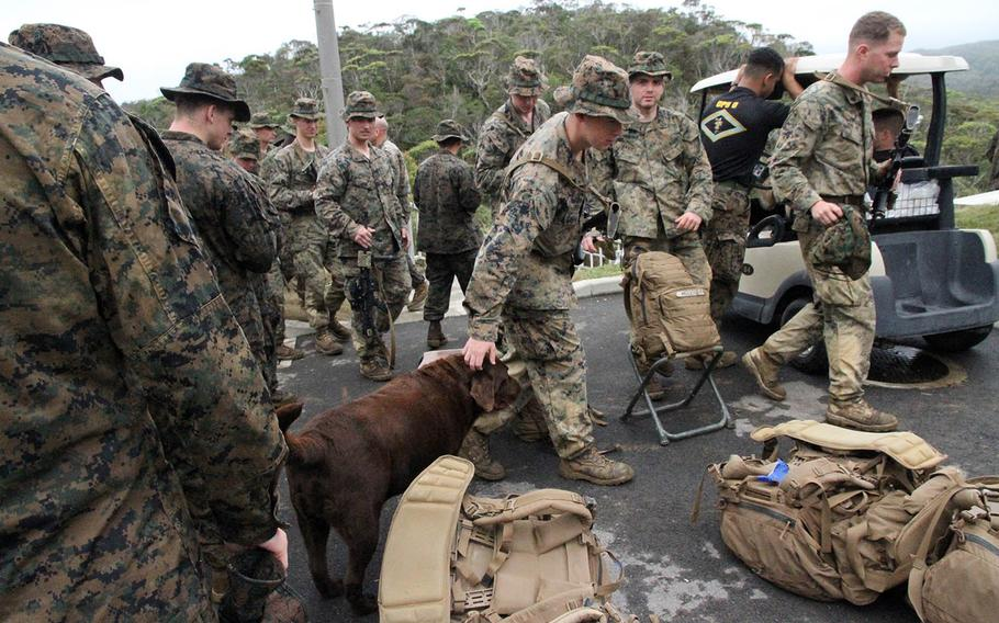 A Marine pets Lance Cpl. Bear before heading out into the jungle at the Jungle Warfare Training Center at Camp Gonsalves, Okinawa, in March 2015.