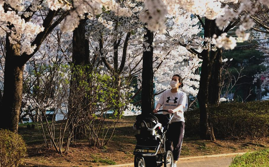 A mother in a protective mask walks her child past cherry blossoms at a park in Pyeongtaek, South Korea, on Wednesday, March 31, 2021.
