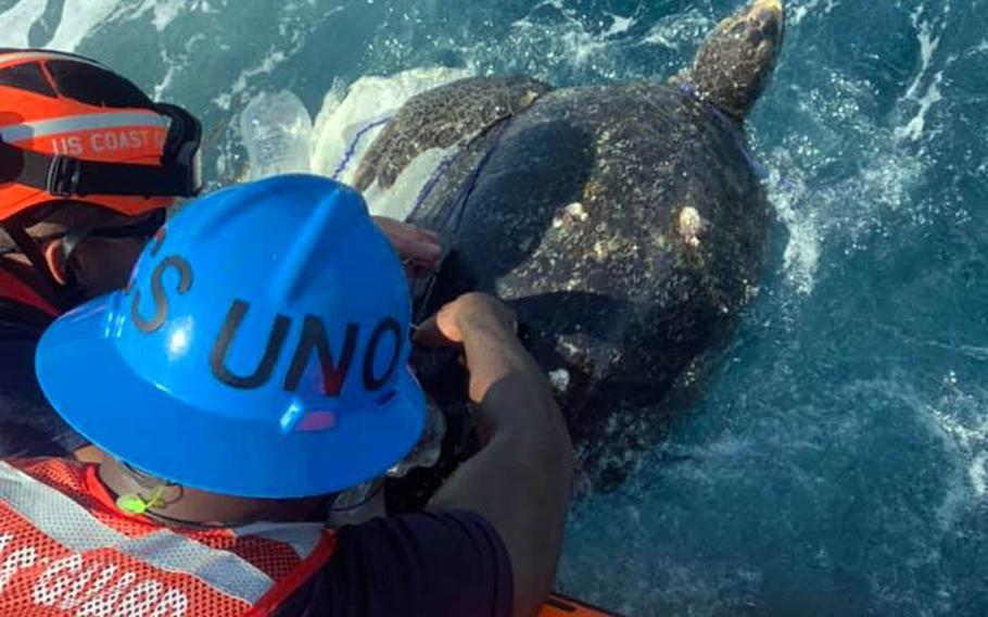 Crew members of the Coast Guard cutter Frederick Hatch rescue a sea turtle entangled in trash following a port call earlier this month on Huatulco, Mexico.