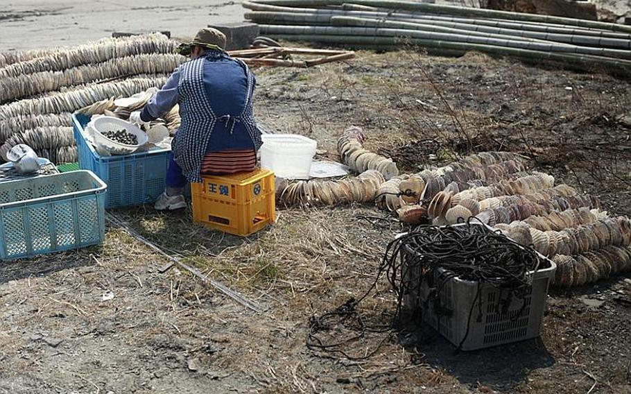 A woman salvages oyster-farming equipment from a huge pile of shells at a harbor in Matsushima, Japan.