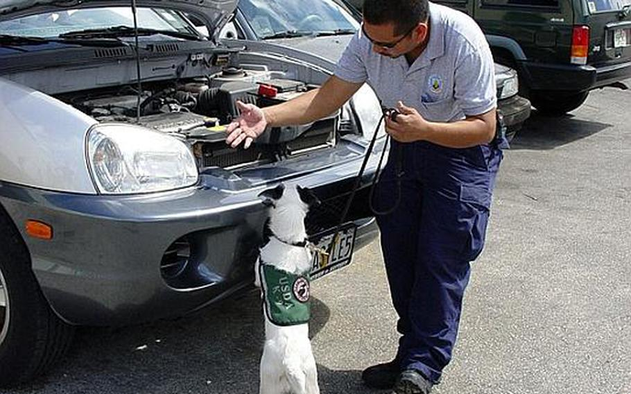 A USDA employee and his search dog inspect vehicles at Guam's airport for the brown tree snake, an invasive pest that has devastated the territory's environment and  caused a plague of island electricity blackouts.