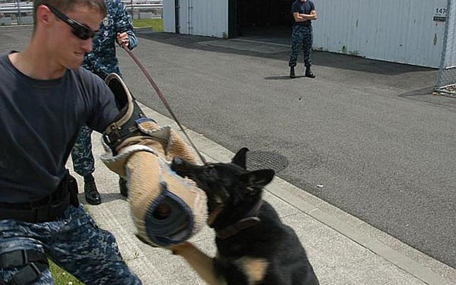 Williams tenses up as he struggles with the powerful military working dog.