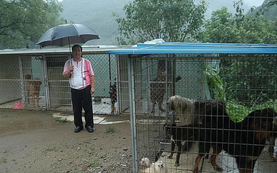 Kim Kwang-su, the mayor of Golsandong in South Korea, poses near the cages that are home to some of the dogs he raises in his small village adjacent to the U.S. military's Camp Casey.