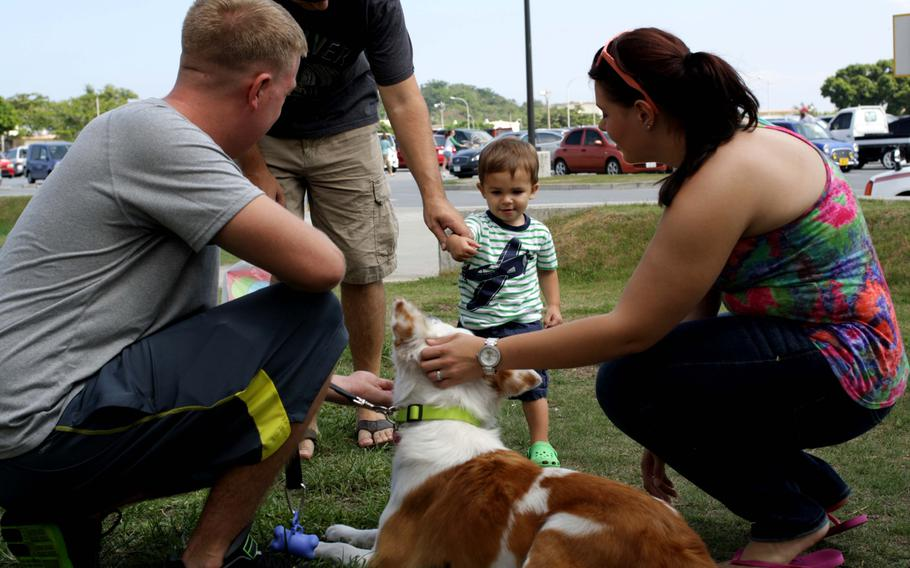 Volunteers introduce a dog to potential adopters during an adoption event on Kadena Air Base, Okinawa, Sept. 7, 2013.