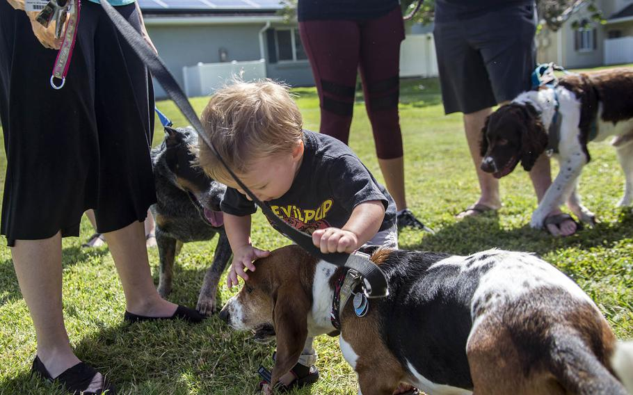 A child pets a basset hound last spring at the then newly opened Pa Honua Dog Park at Marine Corps Base Hawaii.