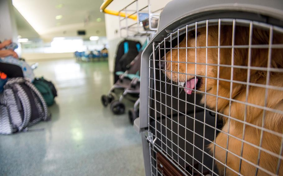 A dog that traveled on a Patriot Express flight sits in its kennel inside the passenger terminal at Yokota Air Base, Japan, in 2018.