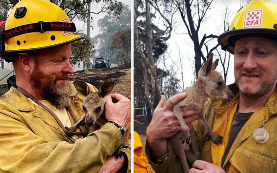 American firefighters Dave Soldavini, left, and Brian Stearns of the U.S. Forest Service made friends with some young kangaroos recently while battling bushfires in Australia.