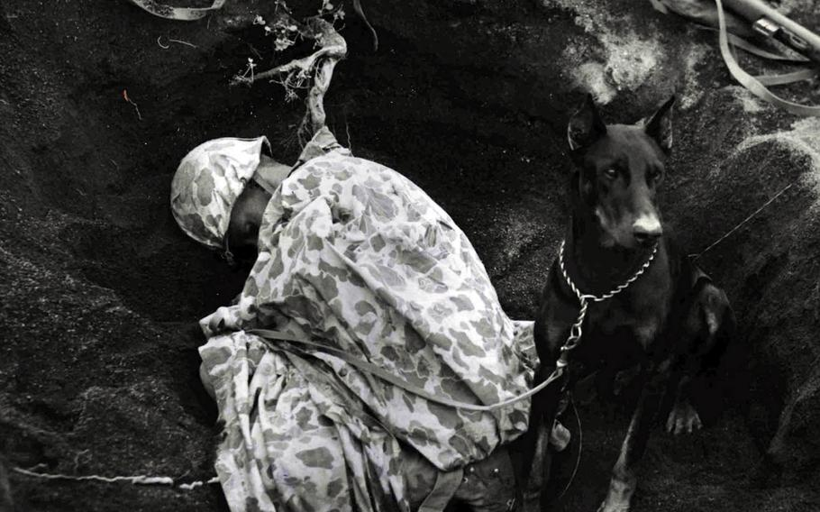 """In this undated photo, """"Butch,"""" a Doberman pinscher Marine War Dog, stands guard as his partner, Pvt. Rez Hester of Liberty, N.C., catches some sleep in a foxhole on Iwo Jima in 1945."""