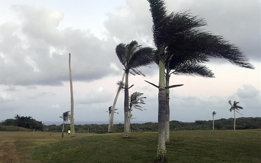 The Palm Tree Golf Course at Andersen Air Force Base, Guam, is infested with voracious coconut rhinoceros beetles, whose meal of choice is the course's namesake coconut palm.