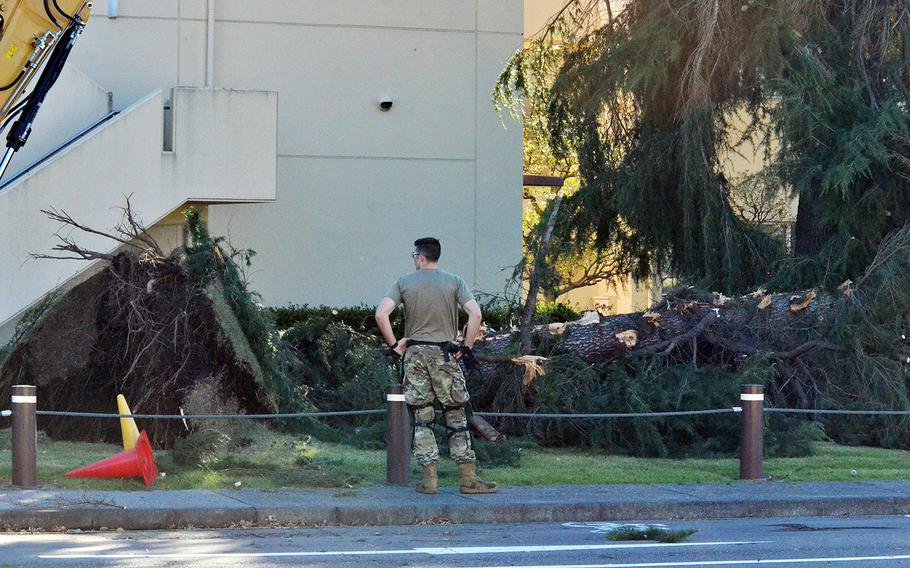 Airmen cut up and clear out a large tree that was downed the following evening by Typhoon Hagibis at Yokota Air Base, Japan, Oct. 13, 2019.