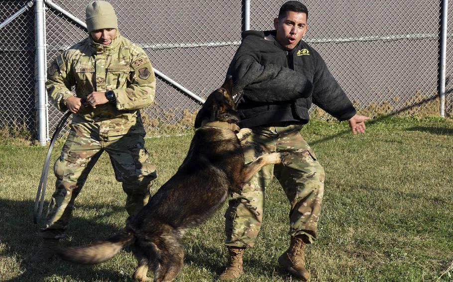 Senior Airman Edwin Leyva, right, a military working dog handler, puts on a demonstration for students at Kunsan Air Base, South Korea, Nov. 8, 2019.