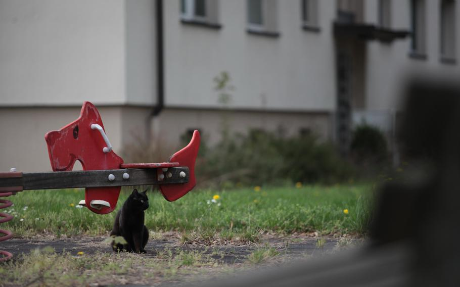A cat sits under unused equipment at a weed-choked playground at the U.S. Army's Mark Twain Village housing area, which will soon be returned to German control. The Army held its final retreat ceremony nearby Friday, symbolizing the end of the Army's nearly seven decades in Heidelberg.
