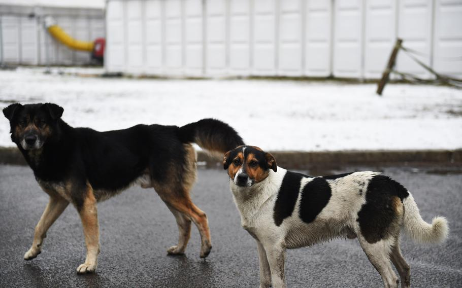 Chico, right, was found by American troops during a military competition in 2018 at Bemowo Piskie Training Area, in Orzszyz, Poland, and given a name and a home.