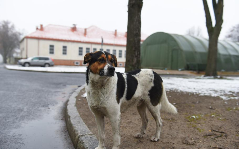 Chico poses for a photo at Bemowo Piskie Training Area in Orzysz, Poland. He is allowed into barracks on base, where he is treated like a distinguished guest.
