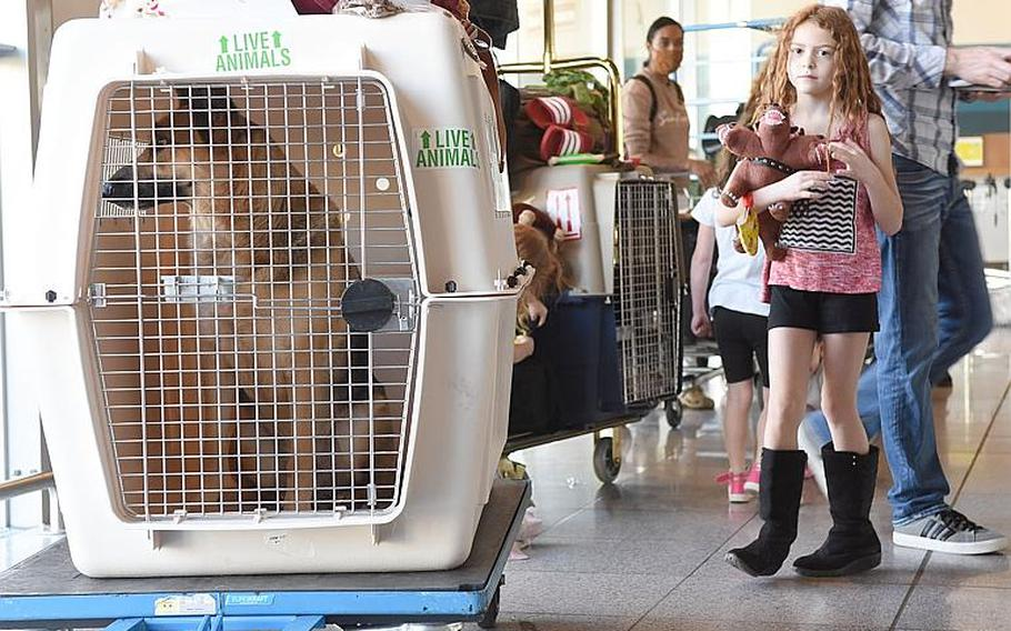 Military families wait in line with their pets while preparing to check in for a Patriot Express flight to the States on Friday, May 29, 2020, at Ramstein Air Base, Germany.